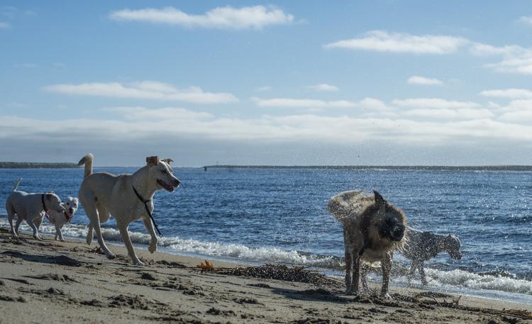 dogs-salisbury-beach-0780
