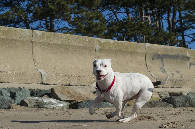 dogs-salisbury-beach-0789