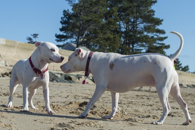 dogs-salisbury-beach-0817