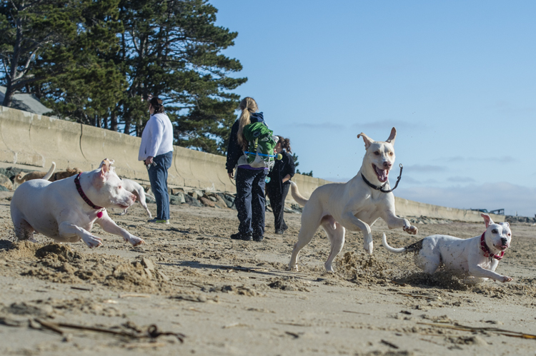 dogs-salisbury-beach-0824