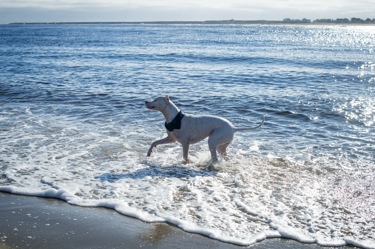 dogs-salisbury-beach-0830