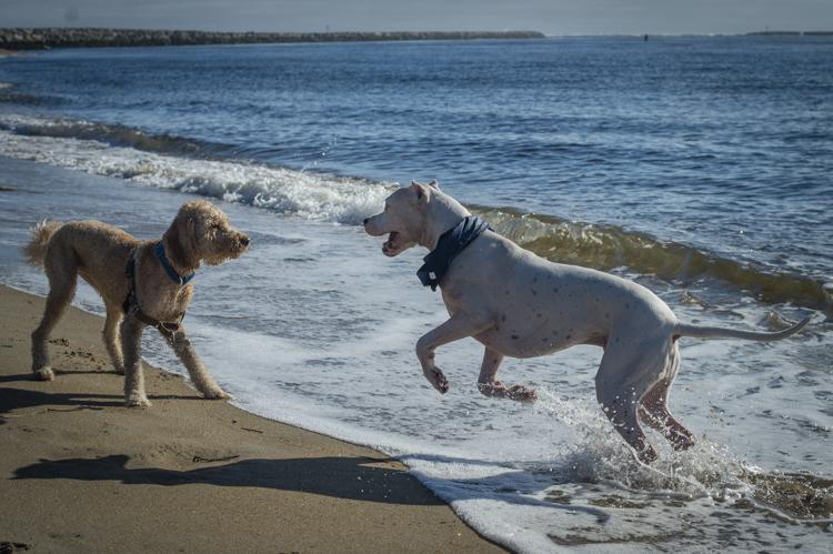 dogs-salisbury-beach-0832