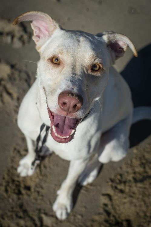 dogs-salisbury-beach-0845