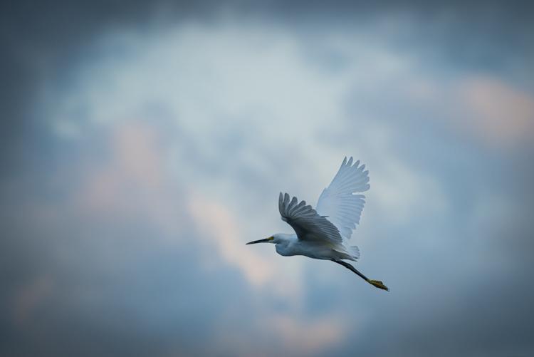 egret, cortez fla