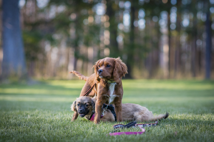 dogs-7461-edit