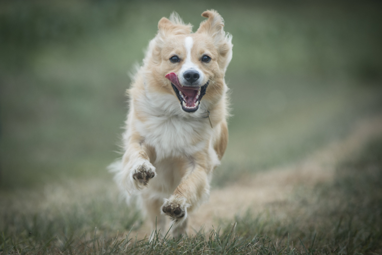 dogs-scout-salisbury-beach-4264